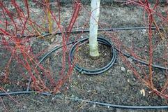 Primo piano dell'irrigazione a goccia Tubo dell'irrigazione a goccia in piante decorative Immagine Stock Libera da Diritti