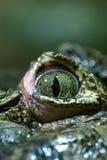 Primo piano dell'occhio del coccodrillo Fotografie Stock Libere da Diritti