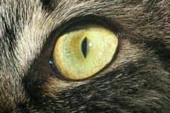Primo piano dell'occhio del gatto Immagini Stock Libere da Diritti