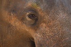 Primo piano dell'occhio dell'elefante Fotografie Stock Libere da Diritti