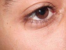 Primo piano dell'occhio di Brown Immagini Stock