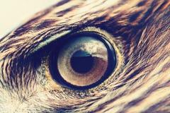 Primo piano dell'occhio di Eagle Immagini Stock Libere da Diritti