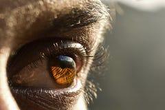 Primo piano dell'occhio dell'uomo fotografia stock