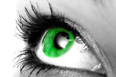 Primo piano dell'occhio verde immagini stock libere da diritti