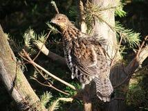 Primo piano dell'uccello che esamina macchina fotografica Fotografia Stock Libera da Diritti