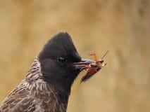 Primo piano dell'uccello di caccia Fotografia Stock Libera da Diritti