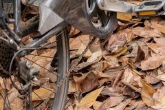 Primo piano della bicicletta sulle foglie asciutte Fotografie Stock Libere da Diritti