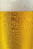 Primo piano della birra Fotografia Stock