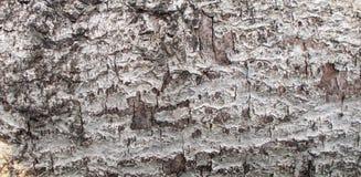 Primo piano della buccia dell'albero strutturato ed ambiti di provenienza fotografie stock libere da diritti