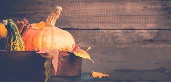 Primo piano della cannella e della zucca Priorità bassa di autunno Concetto di Halloween o di ringraziamento, spazio della copia Immagini Stock