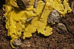Primo piano della cera gialla della colata, concetto giallo dell'estratto della cera immagini stock libere da diritti