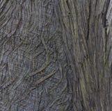 Primo piano della corteccia di albero per fondo strutturato astratto Fotografia Stock Libera da Diritti