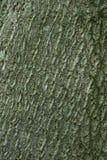 Primo piano della corteccia di quercia Fotografia Stock