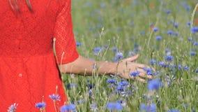 Primo piano della donna della mano rossa del vestito dentro che passa il campo dei papaveri La mano della ragazza che tocca Poppy stock footage