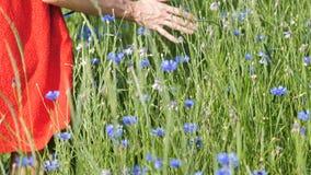 Primo piano della donna della mano rossa del vestito dentro che passa il campo dei papaveri La mano della ragazza che tocca Poppy video d archivio