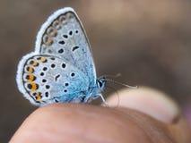Primo piano della farfalla Fotografia Stock