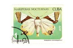 Primo piano della farfalla del francobollo Fotografia Stock Libera da Diritti