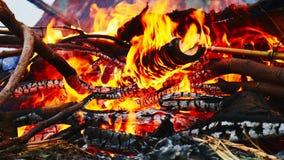 Primo piano della fiamma bruciante del fuoco con legna da ardere masterizzata, masterizzante incendio forestale archivi video