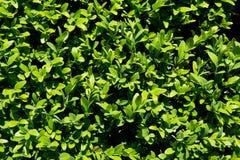Primo piano della flora del giardino Immagini Stock