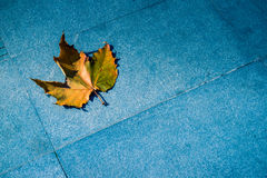 Primo piano della foglia autunnale su terra Fotografie Stock