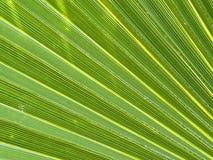 Primo piano della foglia della palma fotografia stock