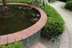 Primo piano della fontana con il pesce rosso arancio ed acqua oscura Immagini Stock Libere da Diritti