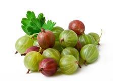 Primo piano della frutta dell'uva spina Fotografia Stock Libera da Diritti