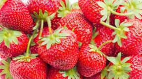 Primo piano della frutta della fragola di giardino Immagine Stock Libera da Diritti