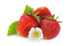 Primo piano della frutta della fragola su bianco Fotografia Stock