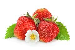 Primo piano della frutta della fragola su bianco Fotografie Stock