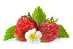 Primo piano della frutta della fragola su bianco Immagine Stock
