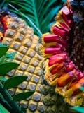 Frutta gigante della palma Immagini Stock Libere da Diritti