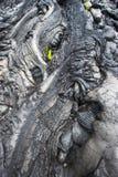 Primo piano della lava e una pianta Fotografie Stock Libere da Diritti