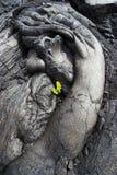 Primo piano della lava e una pianta Fotografia Stock