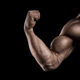 Primo piano della mano muscolare atletica Fotografia Stock Libera da Diritti