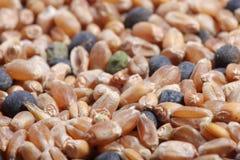 Primo piano della miscela del seme del cereale Fotografia Stock Libera da Diritti