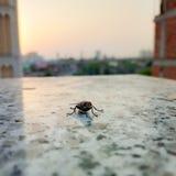 Primo piano della mosca alla finestra fotografie stock