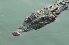 Primo piano della museruola dell'alligatore Fotografia Stock Libera da Diritti