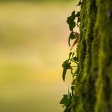 Primo piano della natura Fotografia Stock