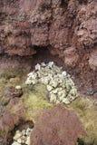 Primo piano della parete della roccia in Maui, Hawai. Immagini Stock