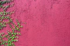 Primo piano della parete rosa coperto parzialmente di piano verde Immagini Stock