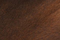 Primo piano della pelle della mucca Fotografie Stock