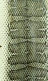 Primo piano della pelle di serpente Fotografie Stock