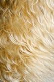 Primo piano della pelliccia del cane. Fotografia Stock Libera da Diritti
