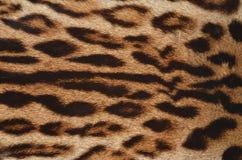 Primo piano della pelliccia del leopardo Immagine Stock Libera da Diritti