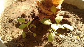 Primo piano della pianta Fotografie Stock