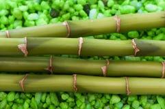 Primo piano della pianta di bambù Immagini Stock Libere da Diritti