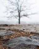 Primo piano della pietra per lastricare bagnata con l'albero vago nel fondo Fotografie Stock Libere da Diritti