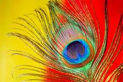 Primo piano della piuma del pavone fotografia stock libera da diritti