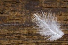 Primo piano della piuma di uccello fotografie stock libere da diritti